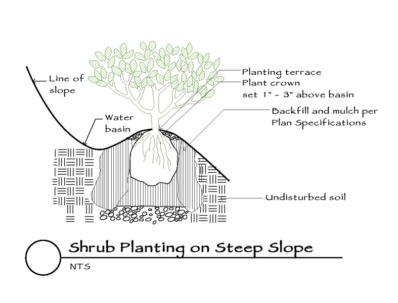 shrub-planting-on-steep-slope