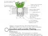 succulentplanting-alloway