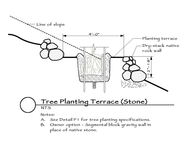 tree-planting-terrace-stone